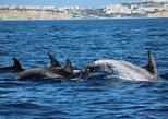 Safaris de avistamiento de delfines en Lagos. Lagos, PORTUGAL