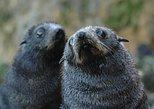 Otago Peninsula Wildlife Day Tour. Dunedin y la peninsula de Otago, New Zealand