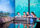 Reef HQ Great Barrier Reef Aquarium General Entry Ticket. Townsville, AUSTRALIA