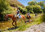 2.5hr Horse Trek, Nelson, New Zealand