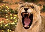 Carnivore Feeding Tour, Windhoek, Namibia