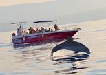 Summer Tour: Dolphin Watching and Guided Snorkeling. Alghero, ITALY
