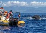 Crucero de avistamiento de delfines y ballenas en las Azores de 3 horas. Ponta Delgada, PORTUGAL