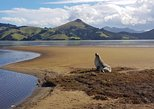 Dunedin and Otago Peninsula Wildlife Tour with Port Pickup. Dunedin y la peni­nsula de Otago, New Zealand