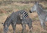 3 Days Adventurous Safari, Arusha, TANZANIA