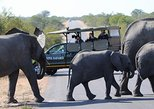 4 Day Classic Kruger National Park Safari,
