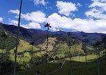 Salento Valle del Cocora Y Filandia. Pereira, COLOMBIA