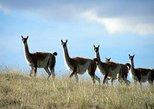 El Calafate Safari Experience, El Calafate, ARGENTINA