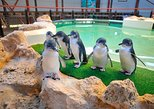 Penguin Island and Caversham Wildlife Park Day Trip From Perth. Perth, AUSTRALIA