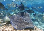 Guided Snorkeling tour at the