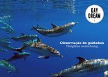 Observação de Golfinhos em Sesimbra. Distrito de Set�bal, PORTUGAL