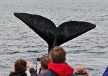 Observação de baleias e degustação de vinhos em Hermanus: excursão particular saindo da Cidade do Cabo,
