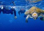 Caiaque com golfinhos e mergulho de snorkel com tartarugas. Tenerife, Espanha