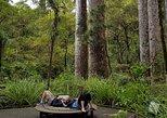Scenic Escape with Winery Lunch and Glow Worm Caves, Bahia de Islas, NUEVA ZELANDIA