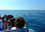 Excursão de barco somente para observação de golfinhos em Sesimbra. Distrito de Set�bal, PORTUGAL