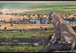 Full-Day Trip to Ngorongoro Crater From Arusha Town. Arusha, Tanzania