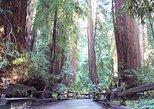 Excursão em Muir Woods com Sequoias na Costa da Califórnia. San Francisco, CA, ESTADOS UNIDOS