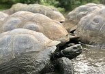 The Giant Tortoise Experience | Lava Tubes + Los Gemelos (Shared Tour),