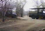 Safari de un día al Parque Nacional Pilanesberg desde Johannesburgo. Johannesburgo, SUDAFRICA