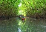 Khao Lak Mangrove Explorers. Khao Lak, Thailand