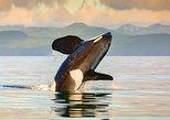 Voo de hidroavião para Victoria e Cruzeiro com observação de baleias. Vancouver, CANADÁ