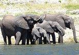 Chobe Safari Experience Day Trip,