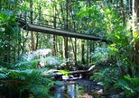 Cape Tribulation, Mossman Gorge from Cairns or Port Douglas. Cairns y el Norte Tropical, AUSTRALIA
