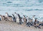 Cruise Shore Excursion Ea San Lorenzo Peninsula Valdes - Patagonia - Argentina, Puerto Madryn, ARGENTINA