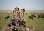 serengeti & ngorongoro 3 days group safari. Arusha, Tanzania