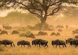 3 days serengeti & ngorongoro lodge tour. Arusha, Tanzania