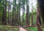Excursão a Muir Woods e Sausalito Tour com Cruzeiro na Baía. San Francisco, CA, ESTADOS UNIDOS
