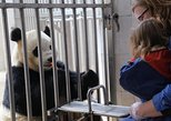 Private Day Tour to Dujiangyan Panda Center with Panda Holding. Chengdu, CHINA