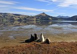 Dunedin City, Wildlife and Scenery Tour. Dunedin y la peni­nsula de Otago, New Zealand
