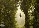 Monteverde Cloud Forest day trip from Samara Beach, ,