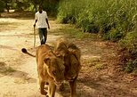 Walking with the Lions in Fathala Reserve,