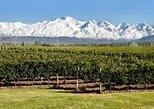 Tour de Vinos y Oliva en Mendoza, Mendoza, ARGENTINA