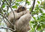 Encuentro con monos y perezosos con recorrido por la isla de Roatán. Roatan, HONDURAS