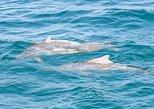 Zanzibar Dolphin Tour. Zanzibar, Tanzania