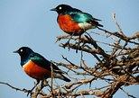 Tanzania Safaris | 1 Day Safaris - Arusha National Park.. Moshi, Tanzania