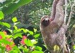 2 days Amazon Jungle tour from Iquitos. Iquitos, PERU