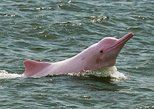 4 days Amazon Jungle tour with Pink Dolphin watch from Iquitos. Iquitos, PERU
