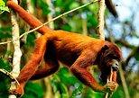 2 days 1 night – Peruvian Tambopata Jungle, Puerto Maldonado, PERU