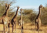 Half Day Tour :Bandia Animals Reserve. Dakar, SENEGAL