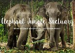 Samui : Elephant Jungle Sanctuary with round trip transfer Half day tour. Koh Samui, Thailand
