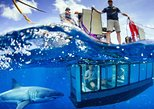 Australia Cruise with Shark Cage Dive Option from Port Lincoln. Port Lincoln, AUSTRALIA
