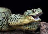 Reptiles And Snakes Park, Cataratas Victoria, Zimbábue