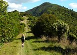 Queen Charlotte Track Four Day Classic Package, Picton, New Zealand