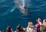 Whale-Watching Cruise from Newport Beach. Newport Beach, CA, UNITED STATES