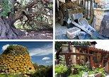 Countryside Experience Tour, The Gallura Region - SARDINIA - ITALY. Olbia, ITALY