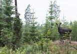 Wildlife Safari Small-Group in Stockholm,